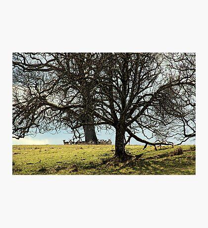 Hidden Herd Photographic Print