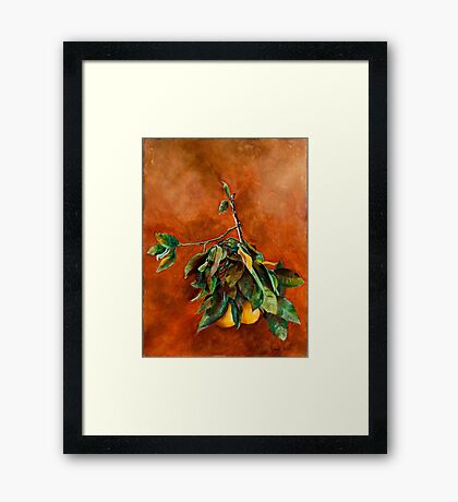 Branch of Grapefruit Framed Print