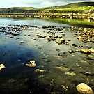 Shoreline by Smaxi