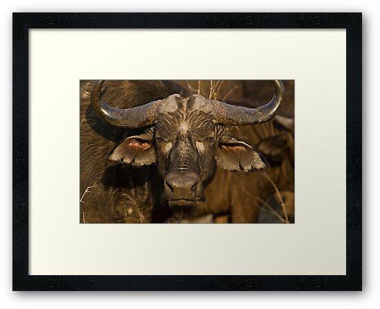 It's No Bull by Michael  Moss
