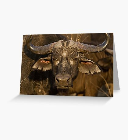 It's No Bull Greeting Card