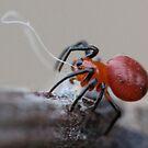 tiny tiny spider by katpartridge