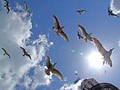 Brighton Seagulls by Colin  Williams Photography