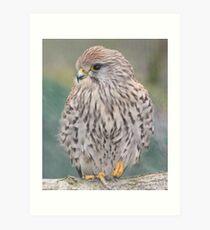 British Wildlife Centre Art Print