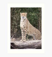 Cheetah IV- What You Did There, I See It. Art Print