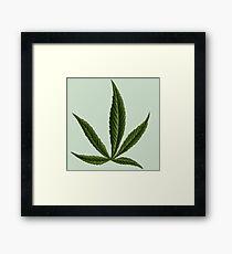 Cannabis #8 Framed Print