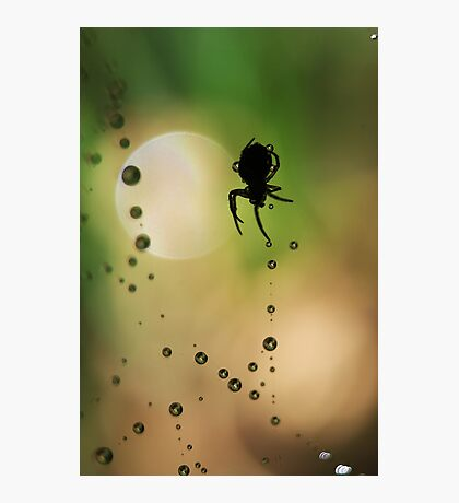 Spider Sillouette Photographic Print
