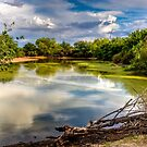 Colorful Pond by George Lenz