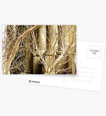 Tamas Postcards