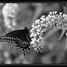 LIVING ART IN BLACK & WHITE by BOLLA67