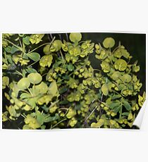 Spring Bush Poster