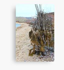 Brush Above the River Canvas Print
