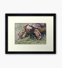 Tortie Munching Framed Print