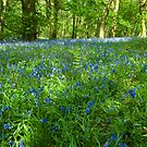 Spring Wood by John Hare