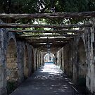 Woodin Walkway at The Alamo by cdarehill