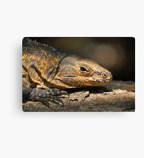 Iguana reptile Canvas Print