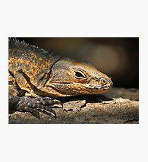 Iguana reptile Photographic Print