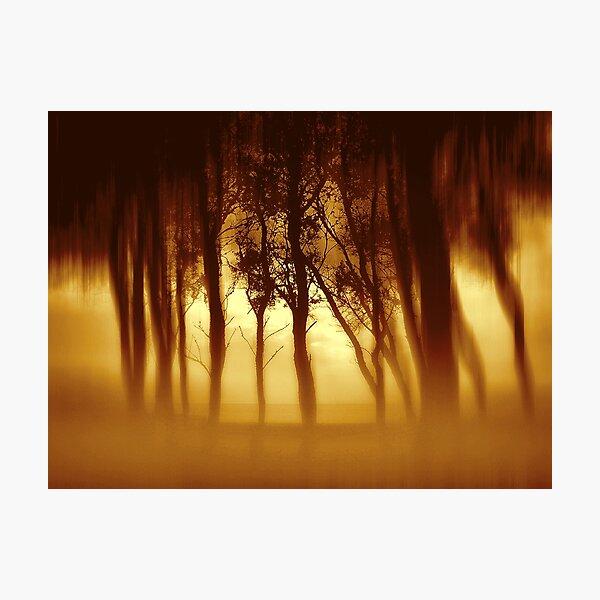 Morning Tree Silhouette(Sepia) Photographic Print