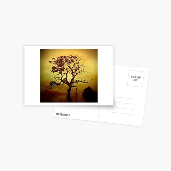 Evening Tree Postcard