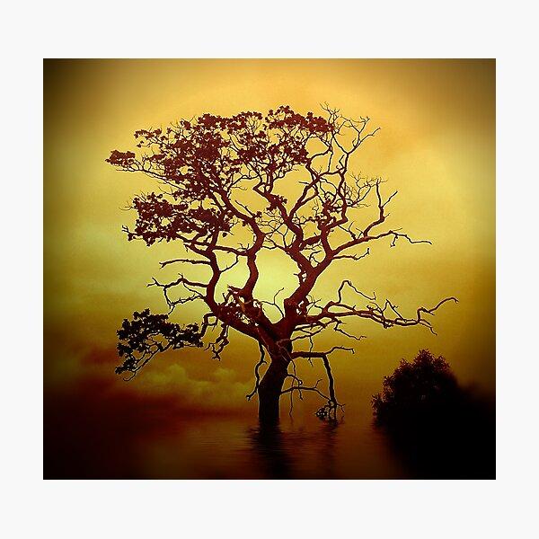 Evening Tree Photographic Print
