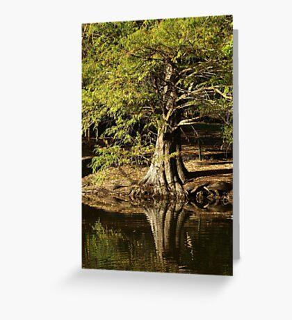 Old Tree Greeting Card