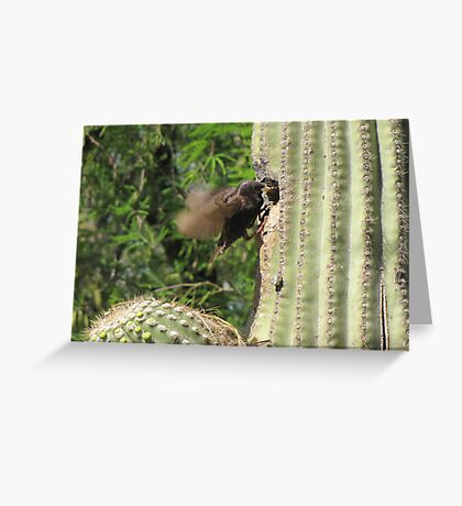European Starling ~ Parent feeding Greeting Card