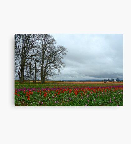 Wooden Shoe Tulip Farm Landscape Canvas Print