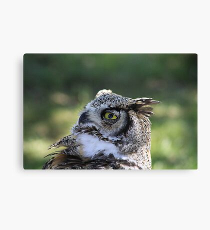 "Great Horned Owl - ""Gordon"" Canvas Print"