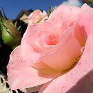 Hello sunshine! by su2anne