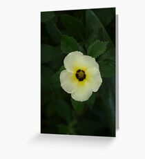 """""""WHITENESS"""" Greeting Card"""