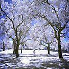 Trees by Kym Howard