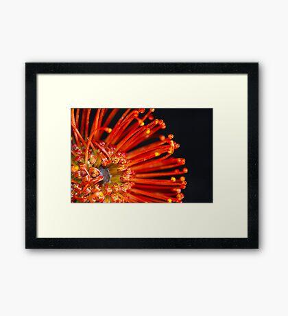 Eye-Catching Flower ~Orange Vlam  Framed Print