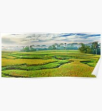 Paddy rice panorama Poster