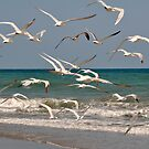 Seagulls in Flight by MaryLynn