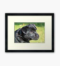 puggy pup Framed Print