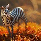 Poor Man's Safari by Talida Pacurar