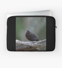 Teenage tension. Eurasian blackbird Laptop Sleeve