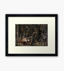 Female Wild Turkey Framed Print