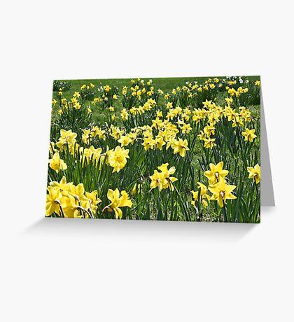 A Field Of Daffodils Greeting Card