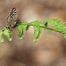 Brown Butterfly by Samantha Higgs