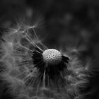 JUST A DANDELION by June Ferrol