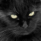 Cats Eyes by Samantha Higgs