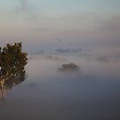 Foggy Morning 2... by John Vandeven