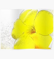Yellow Bell Buttercup  Poster
