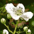 Spring sparkler... ScribblerToo by Susana Weber