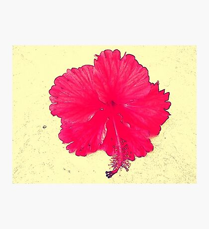 A Tropical Hi Photographic Print