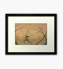 Woods Clearing Framed Print