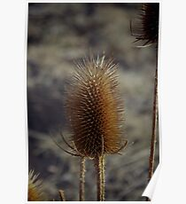 Natures Spikes Poster