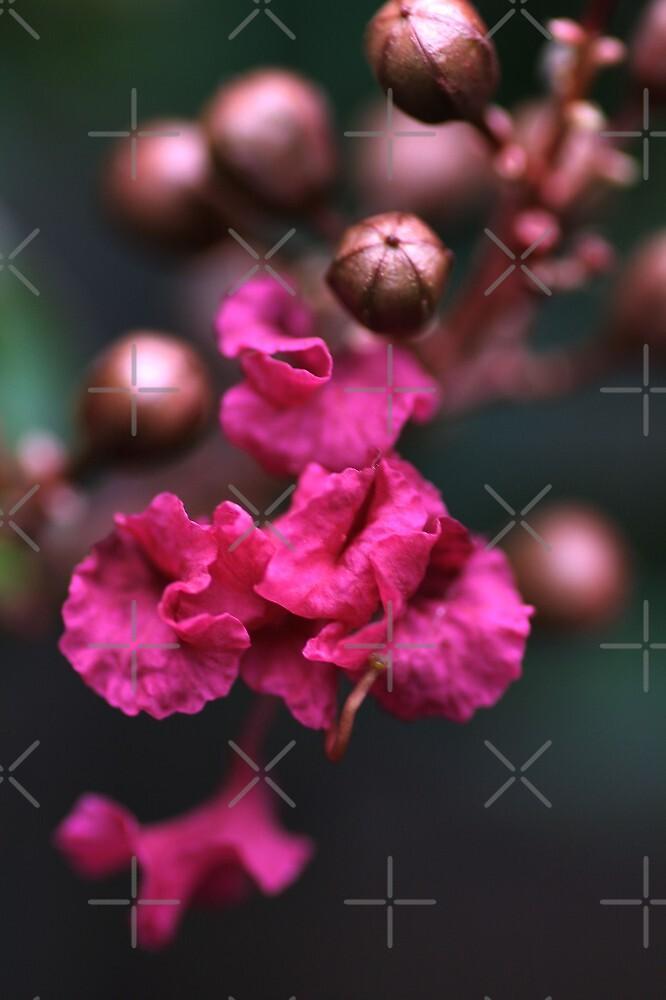 Pink Dream by Joy Watson