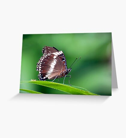 David and Goliath - butterfly  Greeting Card